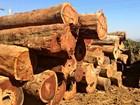 Madeireiras no AM são multadas em R$ 986 mil por comércio ilegal