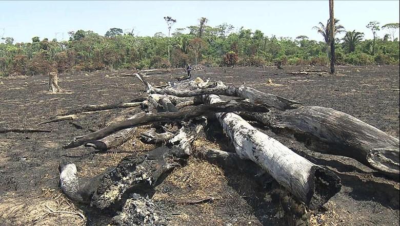 tv-queimada-amazonas-floresta-amazonia (Foto: Reprodução/ TV Globo)