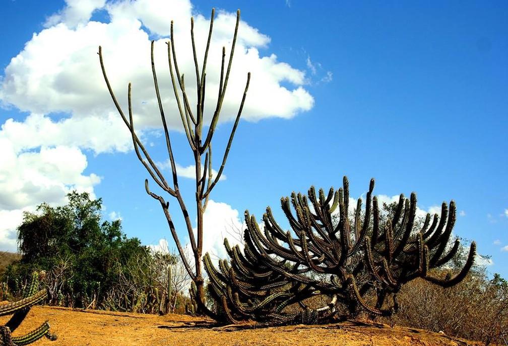 Caatinga se estende por 92% do território da Paraíba (Foto: Sidney Gouveia/Semarh/Arquivo)