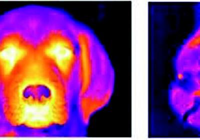 tecnologia_cachorro_nestle (Foto: Divulgação )