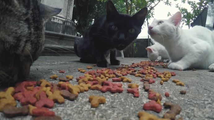 Programa mostra a história de Seu João, que cuida dos gatos do Campo Santo (Foto: TV Bahia)
