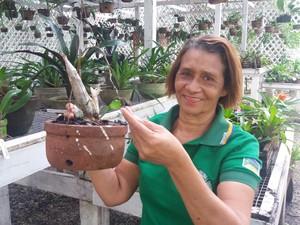 especie, rara, orquidea, estudo, macapá, amapá, Fátima Almeida (Foto: Jéssica Alves/G1)