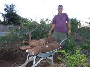 Agricultor disse que plantou o pé de aipim no final de 2012 em São João da Barra (Foto: Arquivo Pessoal / Marcelo Silva Gomes)
