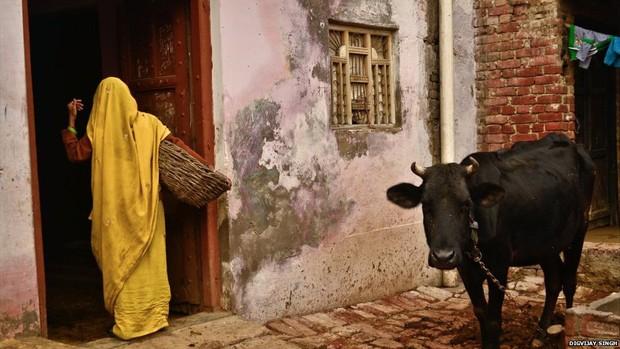 No vilarejo de Kasela, em Uttar Pradesh, limpadores de latrina ainda são considerados intocáveis; na foto, mulher netra em casa do vilarejo pela porto dos fundos para remover excrementos do banheiro  (Foto: Digvijay Singh/BBC)