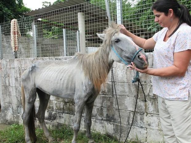 Égua foi resgatada na Zona Noroeste de Santos e recebe tratamento (Foto: Marcelo Martins / Prefeitura de Santos)