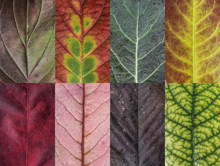folhas outono (Foto: Carola Becker)