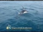 Orcas chegam perto de embarcação  em Arraial do Cabo, RJ; veja vídeo