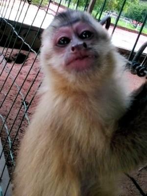 Entre os animais estão três macacos pregos (Foto: Assessoria/ Sema-MT)