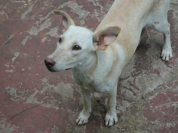 As segunda cachorra que vive na sede do PV (Foto: Eduardo Duarte/G1)