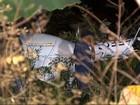 Aeronáutica vai investigar pouso forçado de aeronave na Grande BH