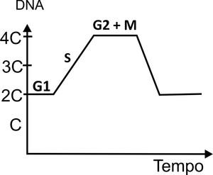 Quantidade de DNA por célula (Foto: Colégio Qi)