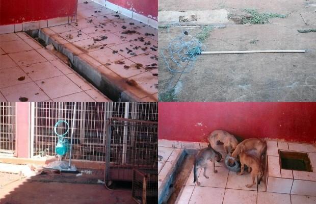 Imagens do Centro de Zoonozes de Itumbiara, Goiás, em março deste ano (Foto: MP-GO)