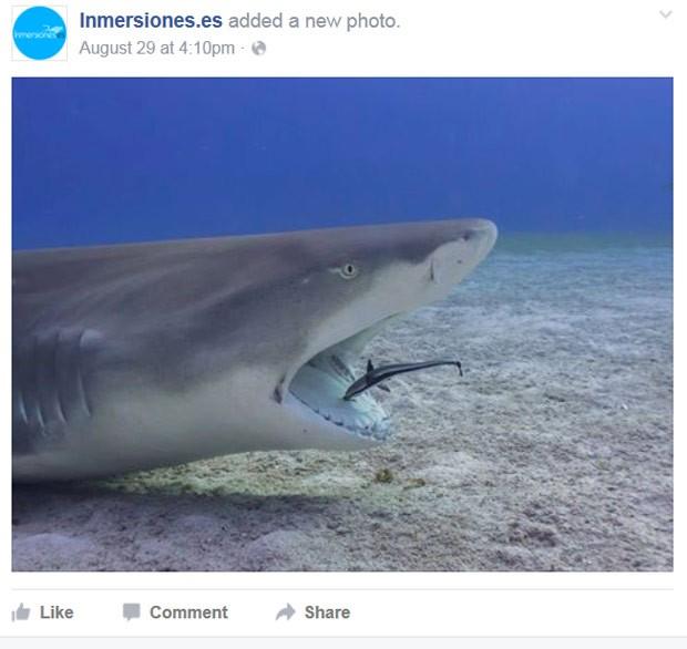 Pavilhao Artesanato Maceio ~ G1 Foto incrível mostra pequeno peixe comendo restos na boca de tubar u00e3o notícias em Planeta