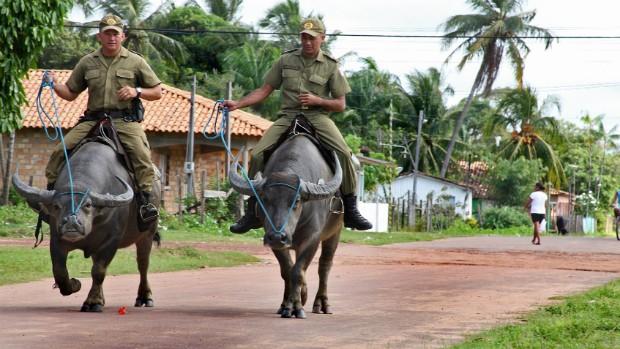 Ação - Caruanas - Búfalos - Polícia (Foto: Divulgação/Alessandra Serrão/Ag. Pará)