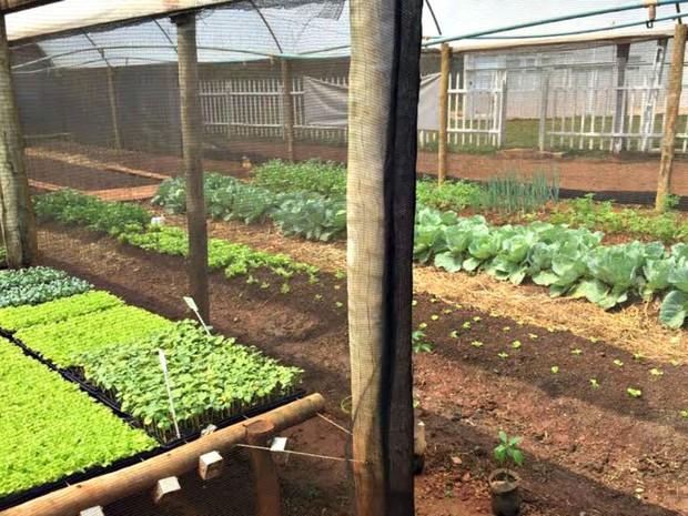Cultivo acontece em área da escola municipal em Campo Grande (Foto: Graziela Rezende/G1 MS)