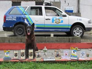 Cão recebeu diversos troféus nos campeonatos que competiu