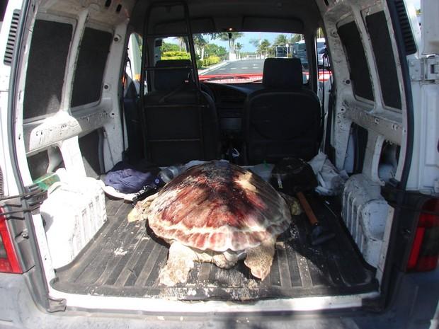 Tartaruga foi levada para ser enterrada na Barreira do Inferno (Foto: Leonardo Andrade)