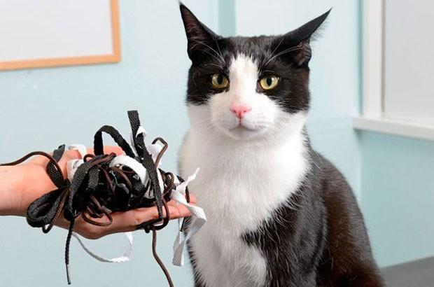 Gato passou por cirurgia após devorar vários partes de cadarços no Reino Unido (Foto: Brighton PDSA Pet Hospital)