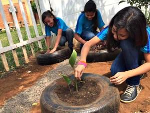Adolescentes escolheram plantas medicinais para cuidar em horta (Foto: Graziela Rezende/G1 MS)