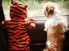 Fofura! Debby Lagranha veste a filha com fantasia do Tigrão