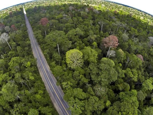 Imagem aérea mostra a rodovia cortando a reserva de Mata Atlântica (Foto: Leonardo Merçon/ Últimos Refúgios)
