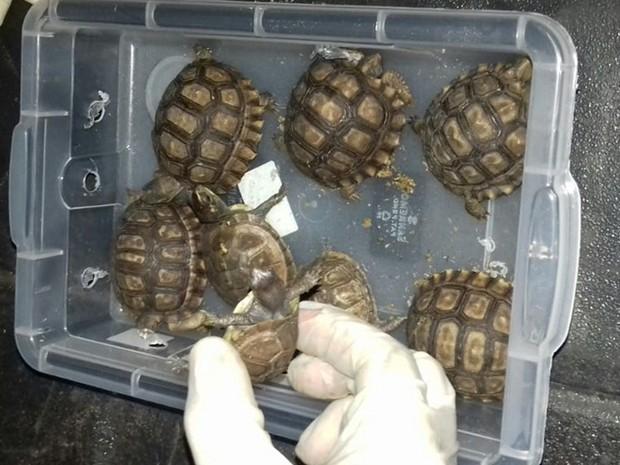 PRF diz que veterinário não tinha autorização para transportar tartarugas e cágados, em Goiás (Foto: Divulgação/PRF)