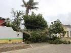 Árvore cai, derruba muro de escola na BA e parte de cidade fica sem energia