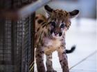 Em 2 anos, mais de 1,4 mil animais silvestres foram resgatados em MT
