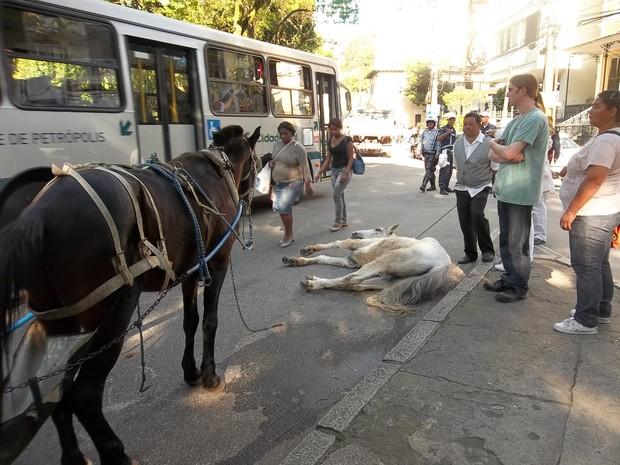 Cavalo caiu por conta de problemas renais em Petrópolis (Foto: Arquivo Tribuna de Petrópolis)