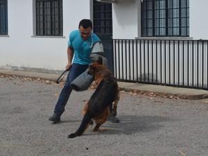 """""""Faço esse trabalho por amor. Gosto muito dos cachorros que treino', explica Gomes (Foto: Emily Costa/G1)"""