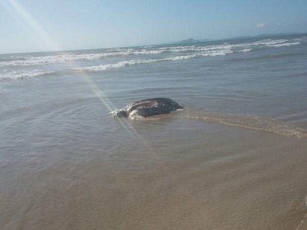 Tartarugas deverão ser enterradas no local pela Prefeitura (Foto: Arquivo pessoal/ Deborah Moura)