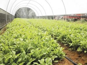 Nesta propriedade, produção beneficia 22 famílias (Foto: Secom Agricultura/Divulgação)