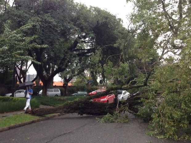 Árvore caiu no bairro Mercês, interditando totalmente a Rua Joaquim da Silva Sampaio (Foto: Thiago Olmedo/ ÓTV)