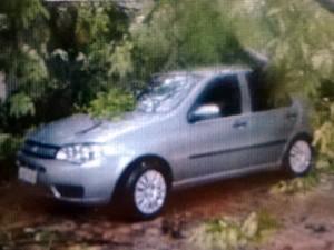 Carro foi atingido por árvore na rua da Bronzita, na Zona Sul de Natal (Foto: Reprodução/Felipe Gibson/G1)
