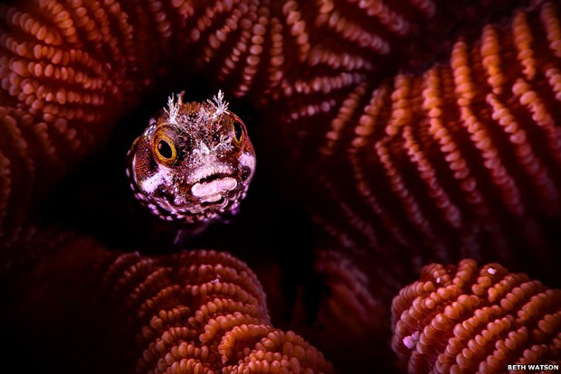 Peixe em meio aos corais coloridos na ilha caribenha de Bonaire conquistou o primeiro lugar na categoria Vida Aquática (Foto: Beth Watson)