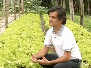 O engenheiro agrônomo diz que estufas pode minimizar a perda na produção de hortaliças (Foto: Reprodução/TV Anhanguera)