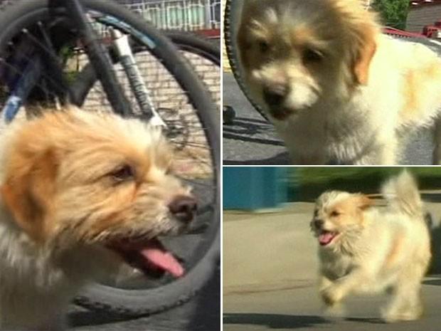 Cachorrinho se uniu aos ciclistas depois que um deles lhe ofereceu comida (Foto: BBC)