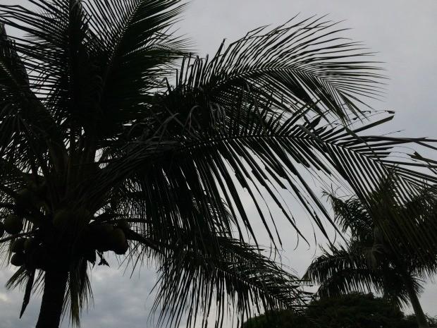 Segunda-feira chuvosa em Campo Grande com queda de temperatura (Foto: Isabela Cavalcante/G1 MS)