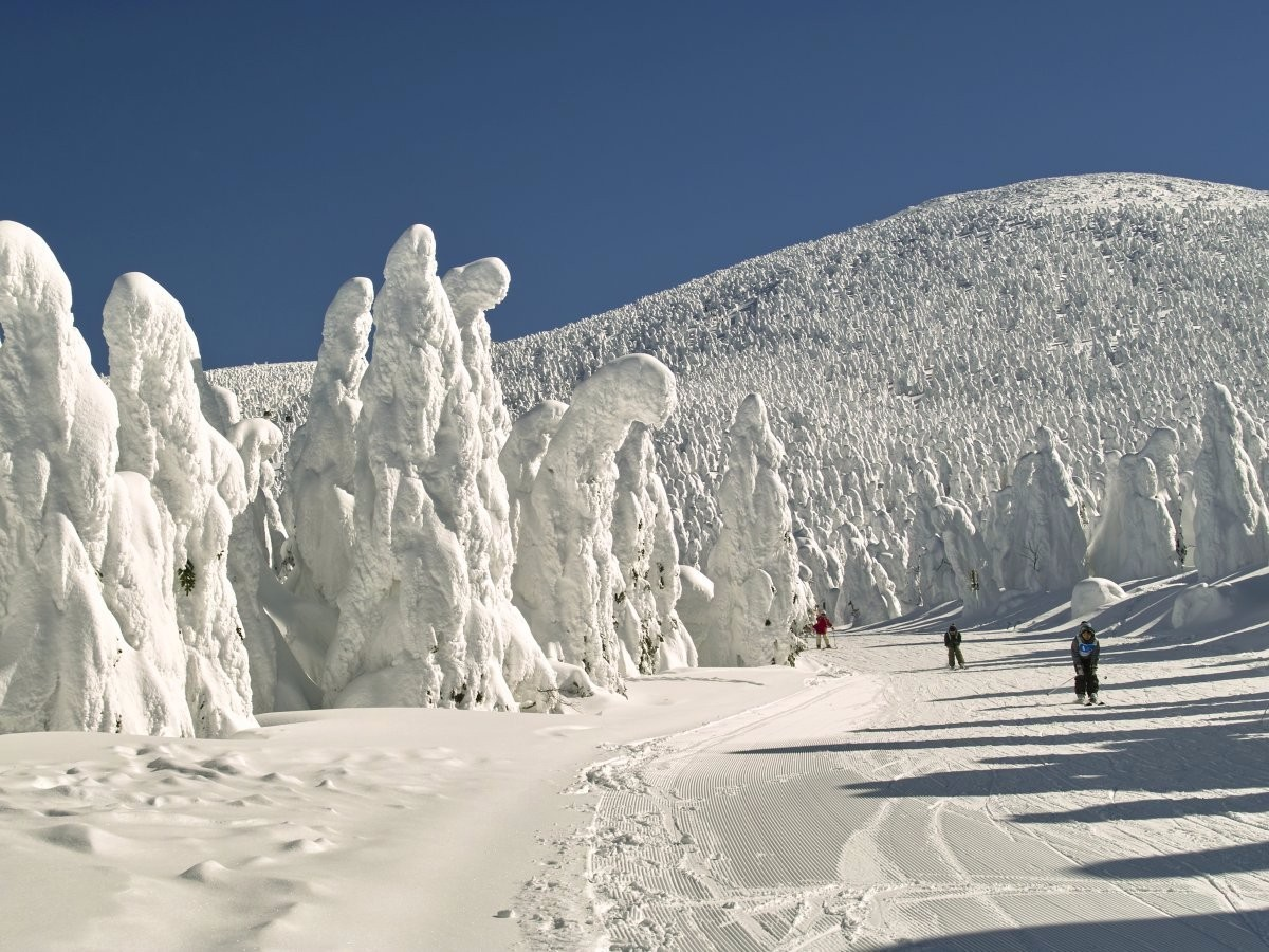 """Durante o inverno, quem visita os resorts da região de Zao Onsen, no Japão, conhece as """"árvores de gelo"""", árvores que ficam cobertas por uma enorme quantidade de neve, criando uma silhueta impressionante. (Foto: Reprodução)"""