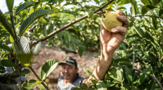 Edital Alimentação e Nutrição disponibilizará R$ 1,5 milhão (Foto: Divulgação)