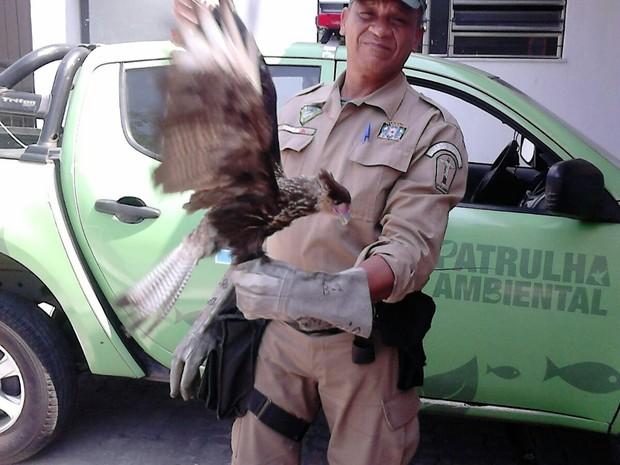 Patrulha Ambiental resgata gavião carcará na Tijuca, Zona Norte do Rio (Foto: Divulgação / Guarda Municipal do Rio de Janeiro)