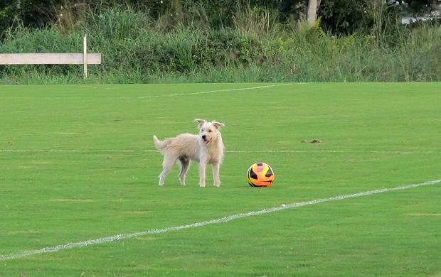 cachorro no treino do Flamengo (Foto: Richard Souza)