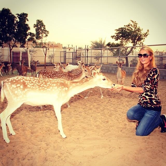 Paris Hilton alimentando veados (Foto: Reprodução/Instagram)