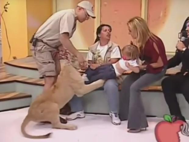 Momento em que leão avança sobre bebê durante programa ao vivo da TV mexicana (Foto: Reprodução)