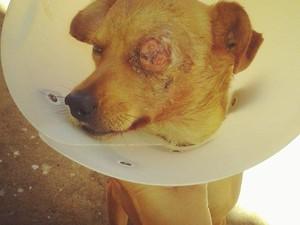 Animal foi diagnósticado com um tumor no olho esquerdo e outro no pênis.  (Foto: Arquivo Pessoal/ Gracielle Moraes)