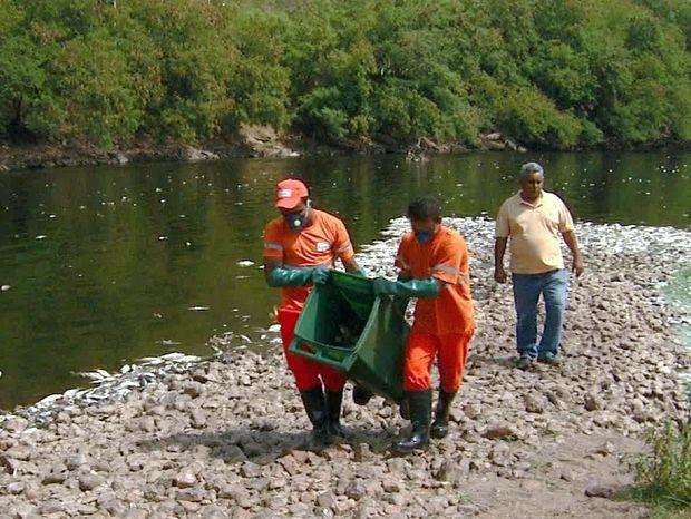 Prefeitura retira milhares de peixes mortos do leito do Rio Piracicaba (Foto: Cesar Fontenele/EPTV)
