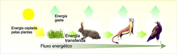 ecossistema (Foto: Reprodução)