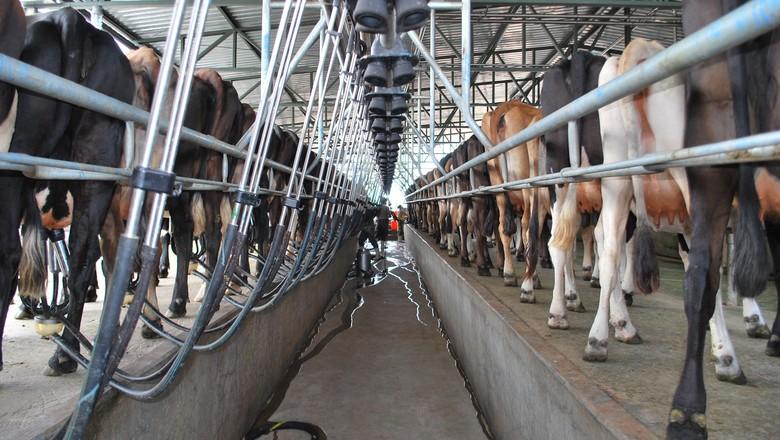 leite-pecuaria-produção-leiteira-mecanizada (Foto: Jorge dos Santos/Ed. Globo)