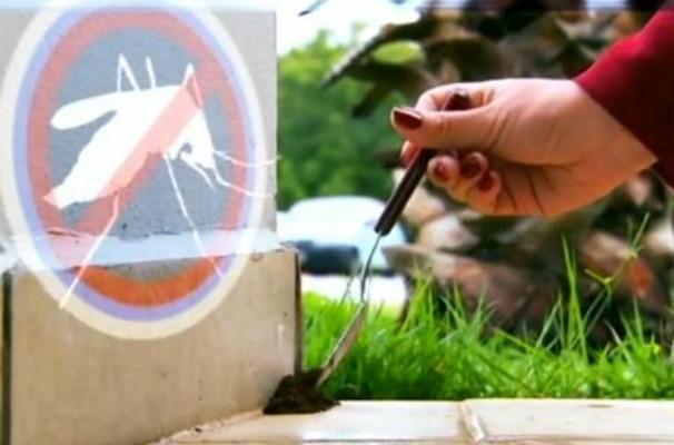 Borra de café em pontos estratégicos ajuda no combate ao mosquito da dengue (Foto: Reprodução / TV TEM)