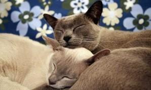 Tema Animal Affection